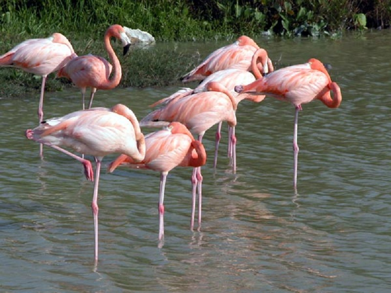 cuba havana varadero cubagood.com куба гавана варадеро тур фламинго
