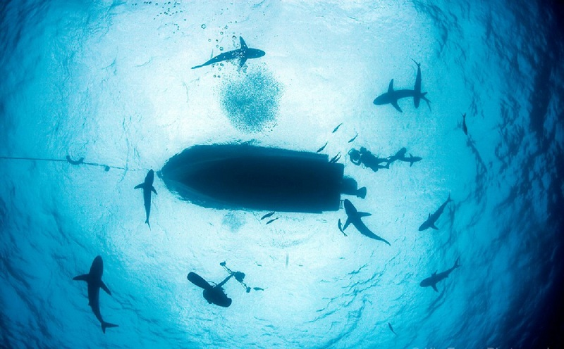 cuba havana varadero cubagood.com куба гавана варадеро тур акула