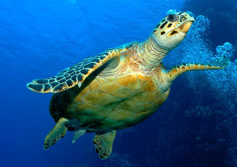 cuba havana varadero cubagood.com куба гавана варадеро тур черепаха