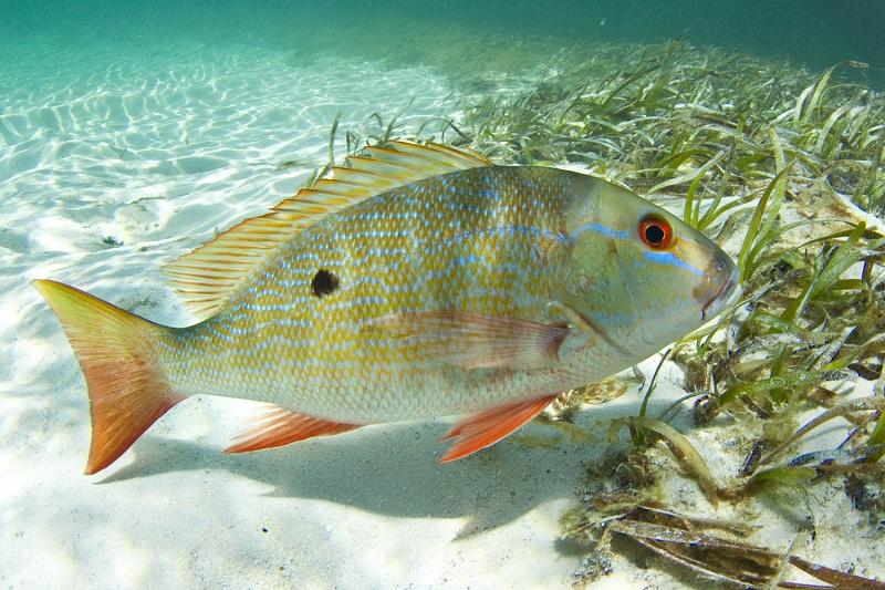Fishing рыбалка  куба cuba havana varadero cubagood.com куба гавана варадеро тур